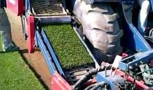 produzione prato, tappeto erboso. manto uniforme